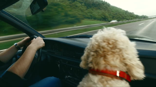 Man enjoys the ride home as much as his dog! video