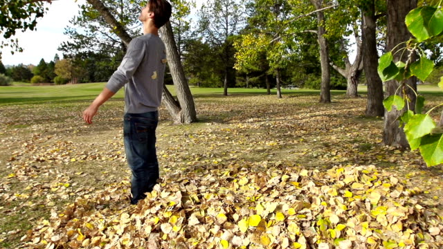 Man falls into leaves video