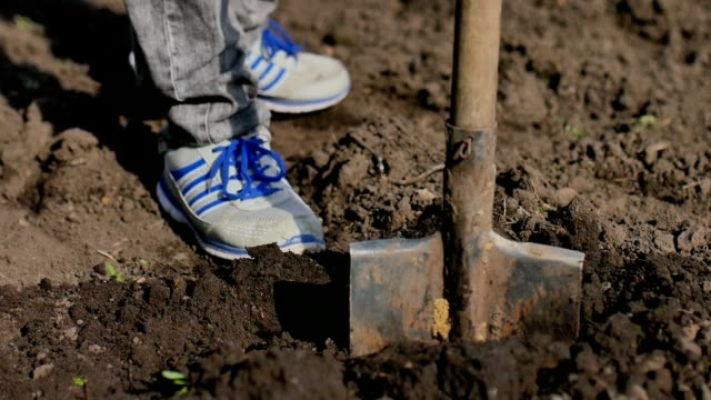 man farmer digs ground old dirty shovel on dry ground slow-motion video video
