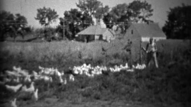 1934: Man feeding big flock of farm birds in rural setting. video