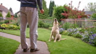 SLO MO Man feeding his dog in the backyard video