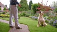 SLO MO Man feeding his dog with kibble video