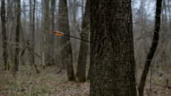 Man firing arrow into tree in forest video