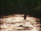 Man flyfishing in river, morning or evening. video