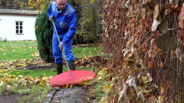 man gardener rake autumnal leaves with big red rake garden. FullHD video