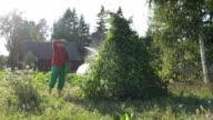man gardener spray large bean plant at late summer day video