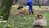 man gardener work in backyard with rake in autumn. FullHD video