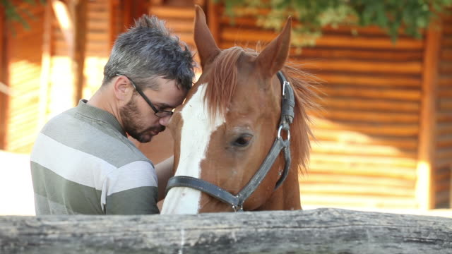 Man grooming a horse video
