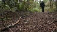 Man hiker hiking in rain forest video