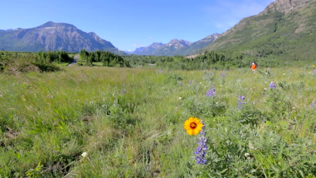 Man Hikes Through Mountain Meadow video