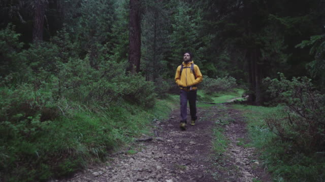 Man hiking and exploring forest area video