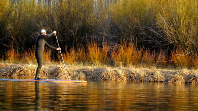 Man in wetsuit paddle boards across river video