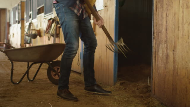 Man is cleaning a stable from hay with a pitchfork. video