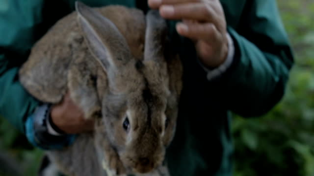 A man is holding a gray rabbit video