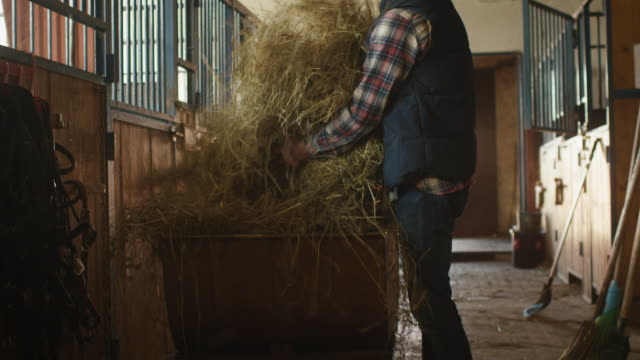 Man is preparing to feed horses with hay from a cart. video