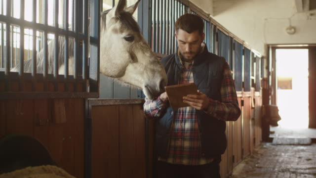 Man is using a tablet computer next to a horse in a stable. video