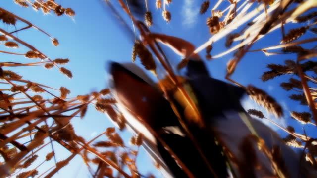 HD SLOW MOTION: Man Jumping Across Wheat video