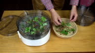 Man layering wild strawberries for drying video