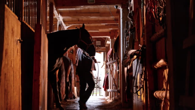 DS Man leading his horse out of stall video