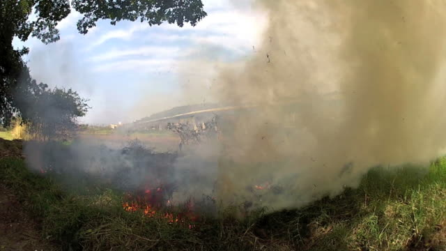 Man made fire Durban South Africa video