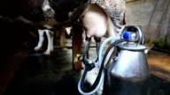 man milk equipment cow video