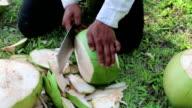 Man peels a big green coconut video
