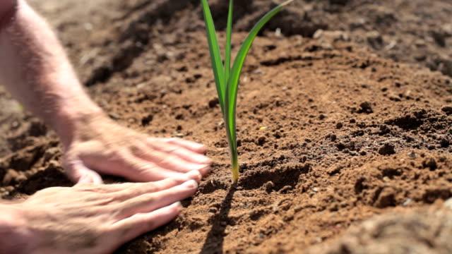 Man planting seedling video