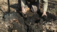 Man Planting Tree for Forest Restoration video