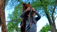 Man put on the bridle on horse's muzzle video