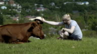 Man Puts A Hat On Cow Head video