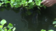 Man release a turtle video