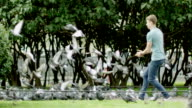Man running and the pigeons fly video