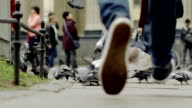 Man running and the pigeons flying video