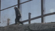 Man Runs Down Hill Away From Border Fence video