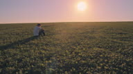 WS Man sitting in a field of clover video