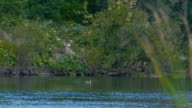 Man spear fishing in the forest river - floats to the surface video