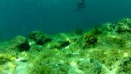 Man spear fishing underwater video