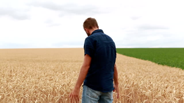 Man standing in wheat field, arms outstretched video