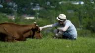 Man Stroking A Cow Head video