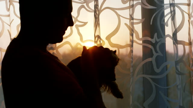 Man stroking beloved dog - Yorkshire Terrier. Should the house by the window at sunset video