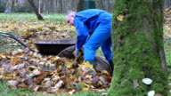 man stuffing dry leaves into material bag sack in autumn garden near cart. video