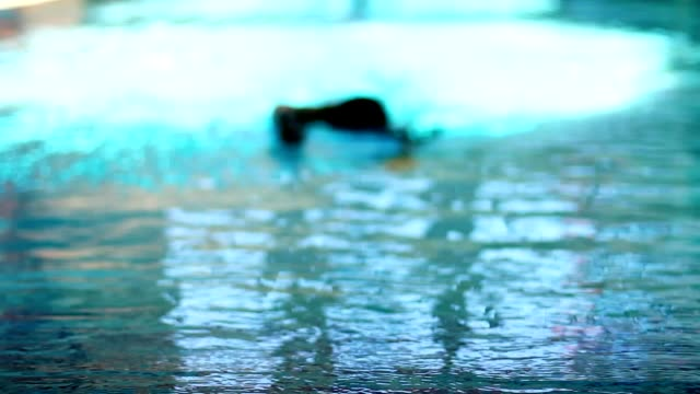 Man Swimmer Gets Out Of Water In Luxurious Swimming Pool video