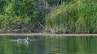 Man swimming and spear fishing in the forest river - floats to the surface video