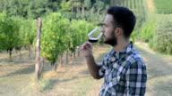 Man Tasting Wine in Vineyard video
