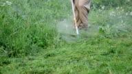 man trimmer cut grass video