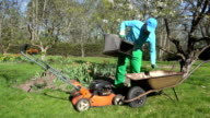 man unload cut grass into barrow. Lawn mowing in spring. video