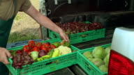 Man unloading the delivery truck full of produce video