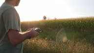 Man using a Drone for Agriculture at Sunset video