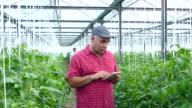 4K Man using digital tablet in greenhouse video