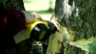 Man using yellow reciprocating saw to cut down tree trunk video